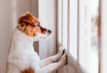 Los-errores-más-comunes-que-cometen-los-dueños-de-mascotas