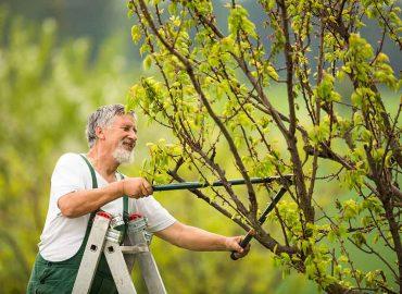 Poda-de-arboles-y-arbustos