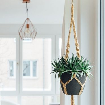 cestas-y-plantas-colgantes