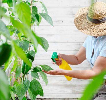tabaco-para-las-plantas