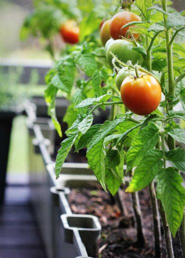 una-hortaliza-en-tu-jardín