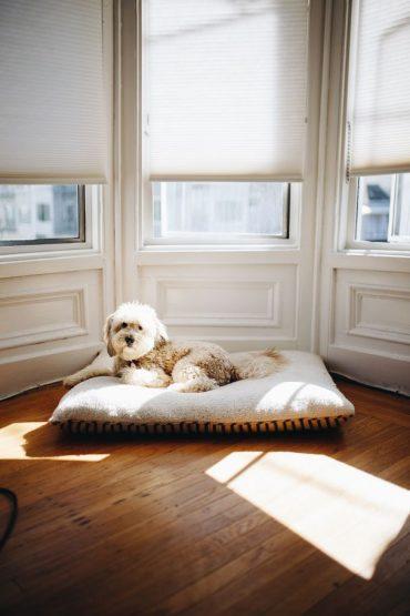 espacio perro
