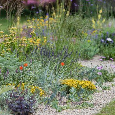 que-hacer-con-tu-jardin-despues-de-la-lluvia