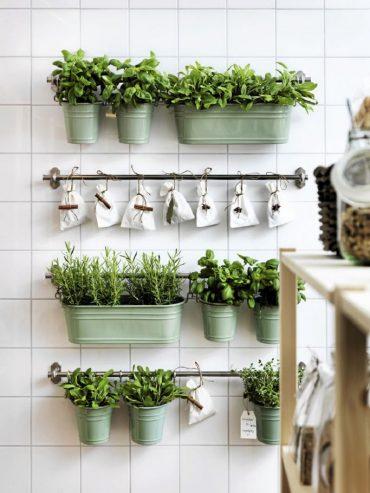 las plantas ideales para decorar la cocina3