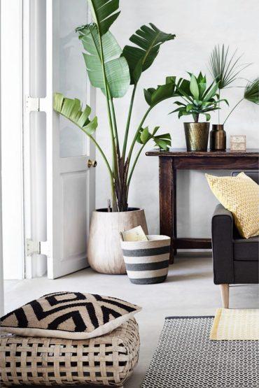 plantas interiores dos and donts 3