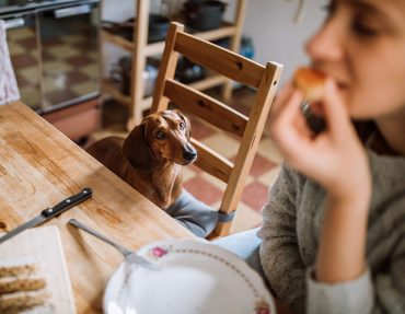 comidas-prohibidas-para-tu-perro