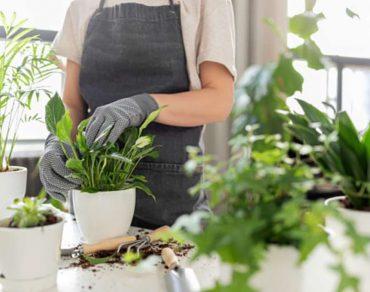 plantas-enfermas-averígualo-por-sus-hojas