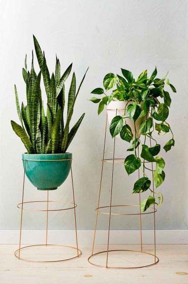 Flores-y-plantas-más-que-un-elemento-decorativo-2