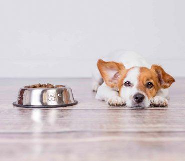 la-alimentacion-de-tu-perro