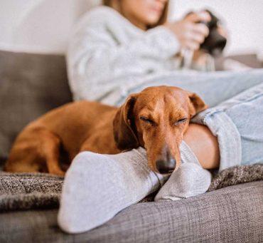 Aromaterapia-para-tus-mascotas